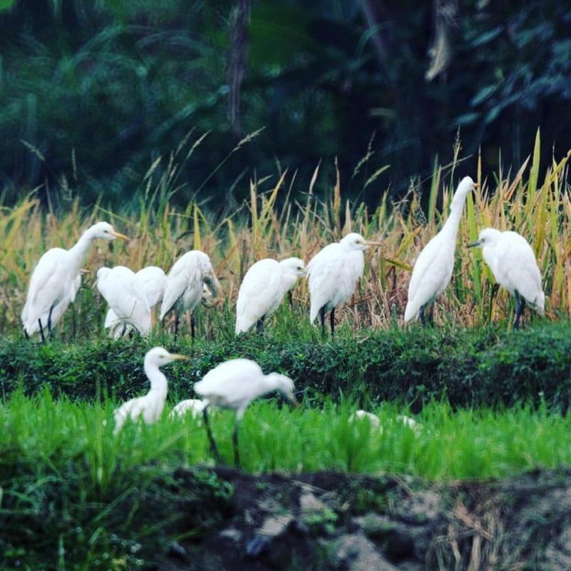 Desa Wisata Ketingan Yogya Sumber Instagram melantjongjaya-min