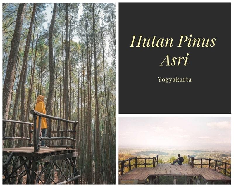Hutan Pinus Asri Sumber Instagram saiffuul & abinurabi