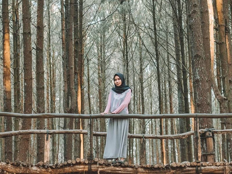 10 Destinasi Wisata Hutan Pinus Yang Mengagumkan