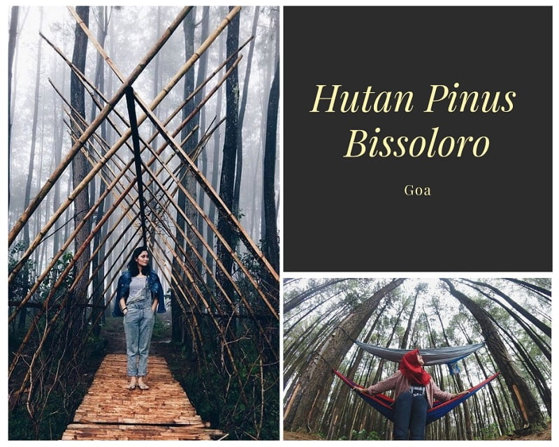 Hutan Pinus Bissoloro Sumber Instagram tamarameylanibarree & alfrdhhh95