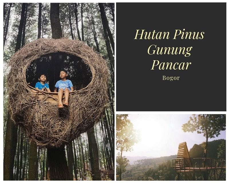 Hutan Pinus Gunung Pancar Sumber Instagram rezafirdauseja & aryodash