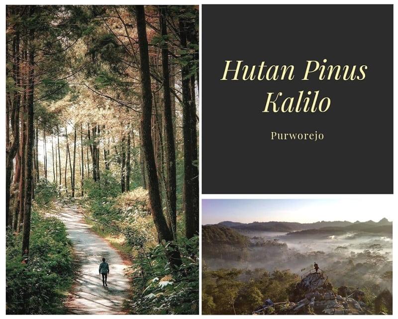 Hutan Pinus Kalilo Sumber Instagram asmasyarief & hutanpinuskalilo