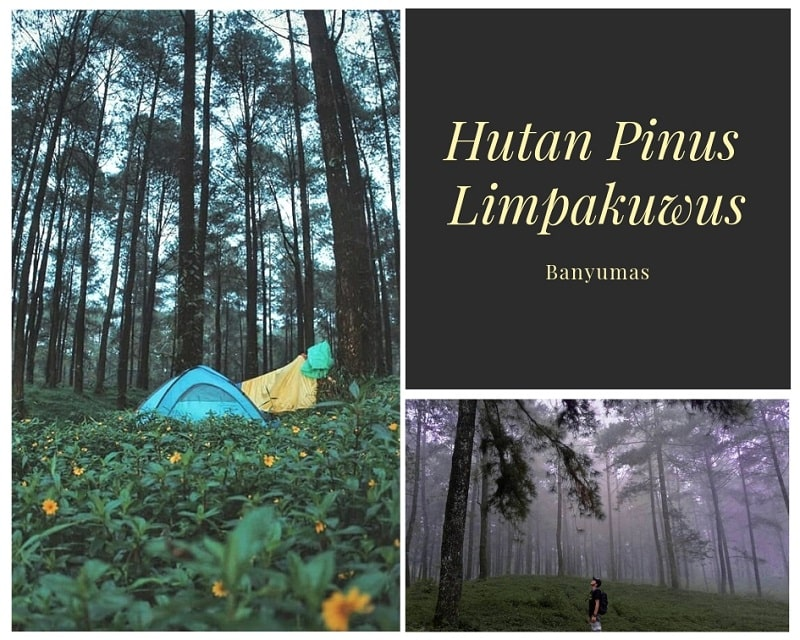 Hutan Pinus Limpakuwus Sumber Instagram ngapakbackpacker & sigit_phiyo