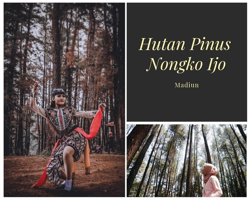 Hutan Pinus Nongko Ijo Sumber Instagram yulia_aprellianam & indrynvs
