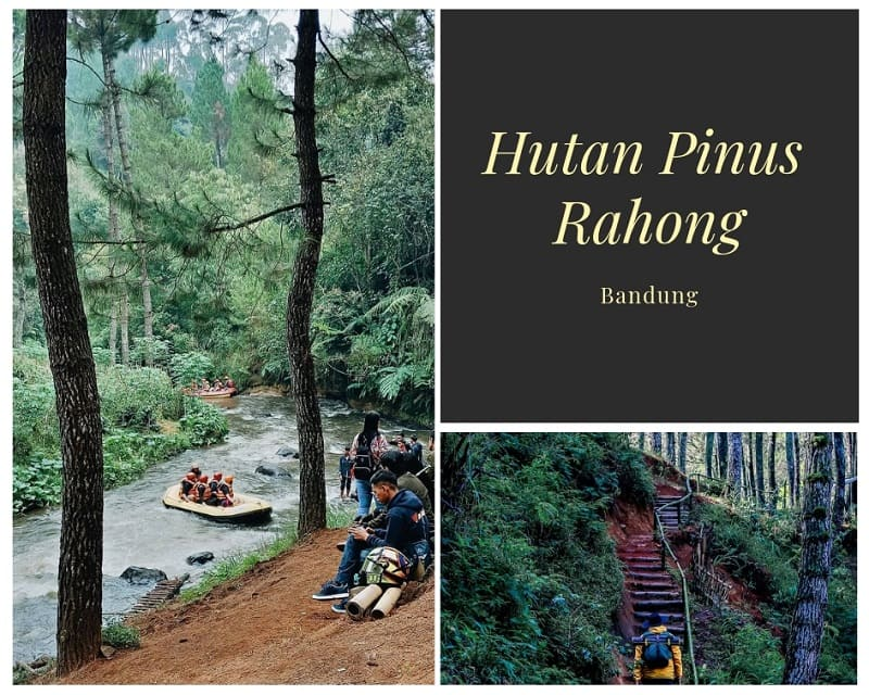 Hutan Pinus Rahong Sumber Instagram awangesti & firdausahoy