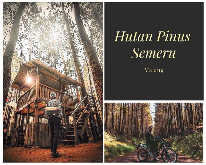 Hutan Pinus Semeru Sumber Instagram cahkw_ & itusipanji