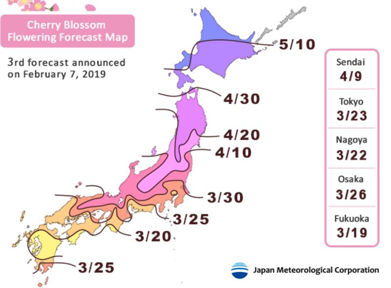 Jadwal Lengkap Musim Sakura Jepang 2019-11