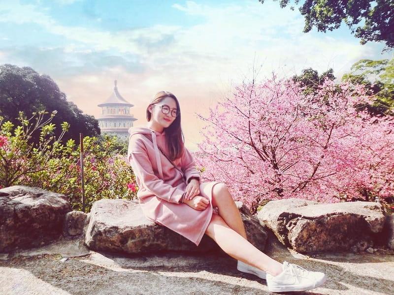 Jadwal Musim Sakura Jepang 2019