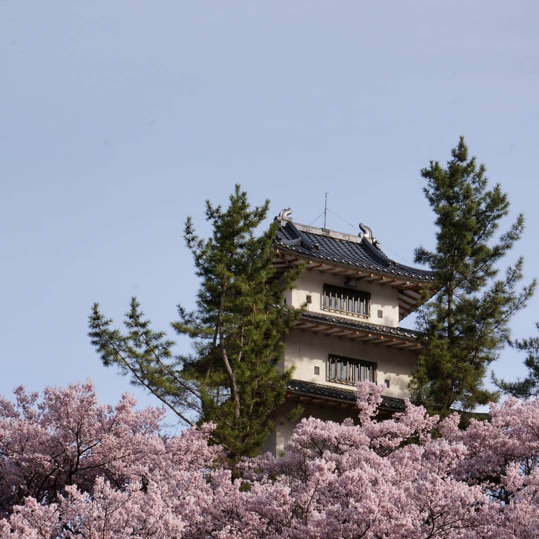Tempat Terbaik Melihat Sakura di Jepang